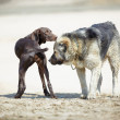 Two dogs - Stockfoto