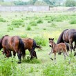 Family of horses on the pasture — Stock Photo