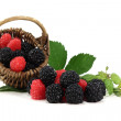 blackberries and raspberries — Stock Photo