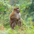 Monkey in the wild - Stock Photo