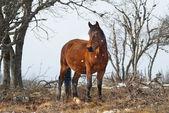 Czerwony koń na polu — Zdjęcie stockowe