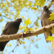 Pigeons on the branch — Stock Photo