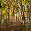 Autumn forest — Stock Photo #7438313