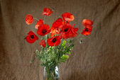Poppies in the vase — Stock Photo