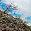 Lonely tree. Ukraine, Crimea, Karabi plateau. — Stock Photo