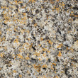 Texture of lichen on the stone. — Stock Photo #7716909