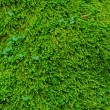 Textured green grass. — Stock Photo