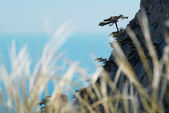 Lonely pine on the rock with the feather grass foreground. — Stock Photo