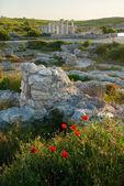 アンティーク ケルソネソスの遺跡。ウクライナ、セバストーポリ. — ストック写真
