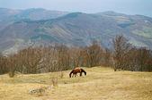 Twee paarden op de bergwand. — Stockfoto