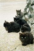 Many black kittens sitting on the ground. — Stock Photo