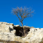 A tree in the sandstone rocks. — Stock Photo