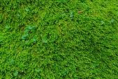 Grama verde texturizada. — Foto Stock