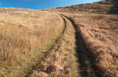 Country road through the grass field. — Stock Photo