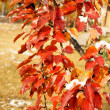 Autumn trees and yellow and red leaves in the garden — Photo