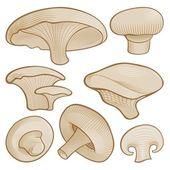 Woodcut mushrooms — Stock Vector