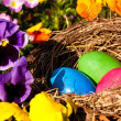 Osternest, easter eggs in a nest — Stock Photo