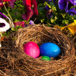 Easter eggs in a nest — Stock Photo #7585182