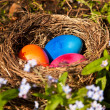 Easter eggs in a nest — Stock Photo #7585237