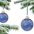 Christmas evergreen spruce tree and blue glass ball — Stock Photo #6930323