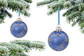 Christmas evergreen spruce tree and blue glass ball — Stock Photo