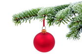 Christmas evergreen tree and red glass ball — Stock Photo