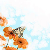 Orange gerberas and butterfly — Stock Photo