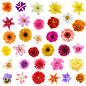 Big collage from flowers — Stock Photo
