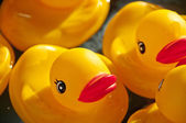 Rubber Ducky — Stock Photo