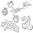 Sketch of fruit — Stock Vector