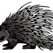 Crested Porcupine (Hystrix Cristata) - Stock Photo