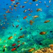 Underwater landscape - Stock Photo