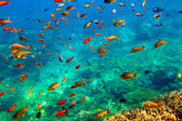 Underwater landscape — Stock Photo