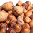 Close up of fresh walnuts and hazelnuts — Stock Photo