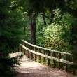 Trail in forest for tourist — Stock Photo #6987092