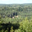 Panoromic view of beautiful  forest — Stock Photo