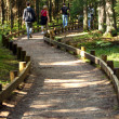 Trail in forest for tourist — Stock Photo