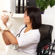Woman veterinarian is checking health of white rabbit — Stock Photo
