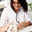 Royalty-Free Stock Photo: Woman veterinarian is checking health of white rabbit