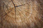 The texture of wood cut across. — Stock Photo