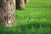 Prato con erba verde e grandi alberi — Foto Stock
