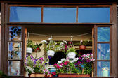 The balcony with flowers blooming — Stock Photo