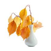 Takken met herfst gele bladeren in de vaas — Stockfoto