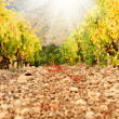 Low angle view of vineyard — Stock Photo