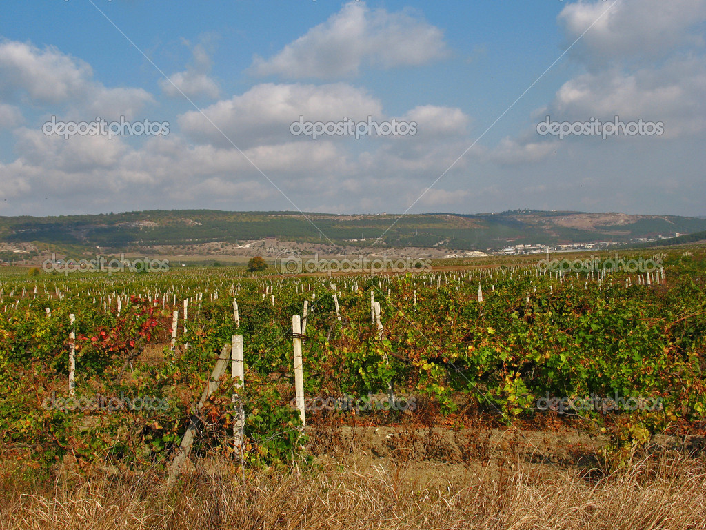 Vineyard — Stock Photo #7227759