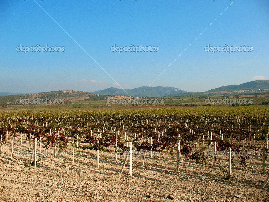 Vineyard — Stock Photo #7789006