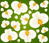 Background with beautiful orchids — Stock Vector