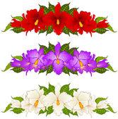 Bakgrund med vackra orkidéer — Stockvektor