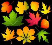 Black background with autumnal leave. Vector. — Stock Vector