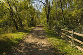 Straight Trail or Dirt Road through Woods — Stock Photo